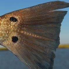 The Louisiana Coast – Redfish Capital of the World Yellowdog Fly Fishing Trips