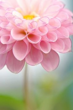 A Splendid Flower Details Are So Perfect Jolie Fleur Pretty In Pink