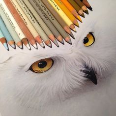 17 Realistic Animals Drawings Next to the Tools Used to Create Them