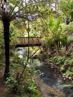 Rainforest Walk Kitekite Falls New Zealand New Zealand Travel, Auckland, Garden Bridge, Waterfall, Outdoor Structures, City, Beach, Seaside, Rain