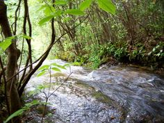 Magical property for sale in Sapphire, NC!  Land and stream!  Hello?