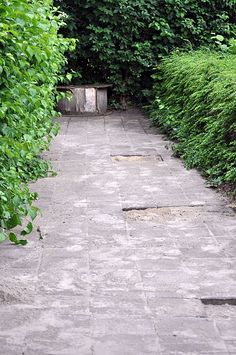 de bestrating naar het fietsenhok, met ruimte  voor boompjes