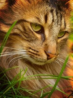 Pensativo.. #gatos #cats #mascotas