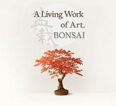 A Living Work of Art. BONSAI