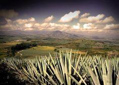 Tequila, Pueblo Magico de Jalisco, Mexico