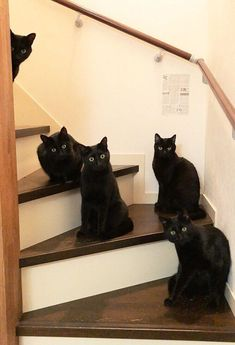 A Massive Black Cat Compilation - World's largest collection of cat memes and other animals Cool Cats, I Love Cats, Funny Cats, Funny Animals, Cute Animals, Grumpy Cats, Animals Images, Pretty Cats, Beautiful Cats