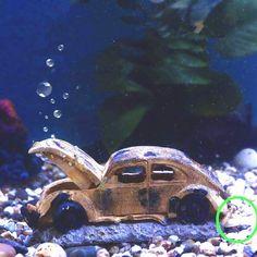 🐟【ECO-freundliches Material】Die Aquarium Dekoration besteht aus ungiftigem und harmlosem Harz, das nicht verblasst und keinen Einfluss auf die Fisch- und Wasserqualität hat. 🐟【Dekoration & Blasenfunktion】Wenn Sie das Luftpumpe Rohr anschließen, es zu Luftblasen kommen, und Ihre Fische können Spaß mit der Luftblase haben. 🐟【Größe】: Länge 15,9 cm Breite 6,9 cm und Höhe 6,9cm, geeignet für kleine, mittelgroße Aquarien, eine hohe Salzwasserbeständigkeit, entworfen für Süß- und… Freundlich, Decoration, Octopus, Vintage, Animals, Material, Automobile, Exit Room, Pisces