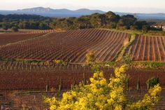 Provence, Vineyard, France, Outdoor, Outdoors, Vine Yard, Vineyard Vines, Outdoor Games, The Great Outdoors