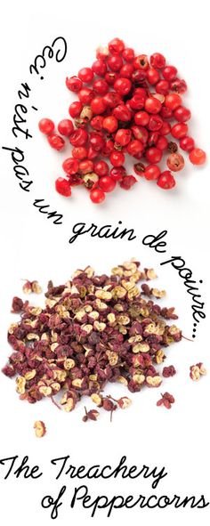 [ A Passion for Pepper: Ceci n'est pas un grain de poivre... ] Pink Peppercorn and Szechuan Peppercorn—these varieties ARE NOT from the Piper Nigrum plant. They are related to black, green and white peppercorn only in taste. ~ from Monterey Bay Spice Company