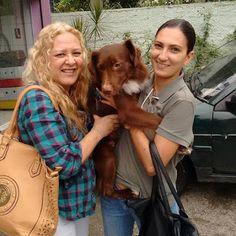 TAXI DOG MONTANHA TRANSPORTE DE ANIMAIS NO RIO DE JANEIRO: HULK06/11/2015 -- Sexta-feira abençoada já com o ...