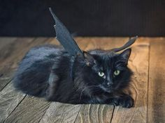 Halloween Pet Costume: Black Bat | Holiday Decorating and Entertaining Ideas & How-Tos | HGTV