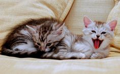 Beautiful Adorable Kitties Download Image Pictures Wallpaper