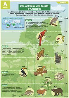 Des animaux des forêts d'Amérique