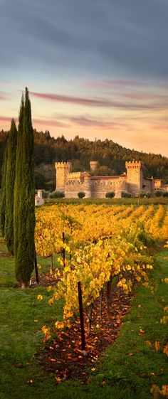 At the Castello di Amorosa winery in Napa Valley, California, USA. Places To Travel, Places To See, Travel Destinations, Napa Valley, Palaces, California Travel, California Wine, Northern California, Temples