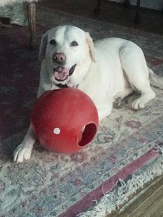Best Toy ever ; Hard plastic red ball with holes and inside is another ball.  CABELLA'S Sporting good stores (even my 100 lb lab can't destroy it; plays with it daily; great exercise)