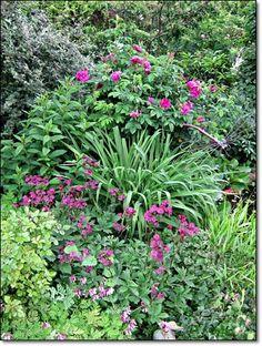 hosta rodgersien und lilien begleitpflanzen. Black Bedroom Furniture Sets. Home Design Ideas