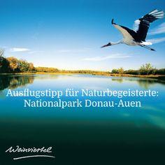 Bei einem Ausflug in den Nationalpark Donau-Auen kannst du das einzigartige Schauspiel der Natur beobachten & bestaunen. Attraktive Wander- und Radrouten sowie großartige Beobachtungsplätze laden ein, vom stressigen Alltag Abstand zu gewinnen. Den Entdecker in dir wecken hingegen geführten Themenexkursionen und die spannende Erlebniswanderungen und mit der Teilnahme an einer Bootsfahrt kannst du die Aulandschaft vom Wasser aus genießen.  © Nationalpark Donau-Auen / MA49 Bratislava, Animals, Attendance, Types Of Animals, River, Joie De Vivre, Road Trip Destinations, National Forest, Animales