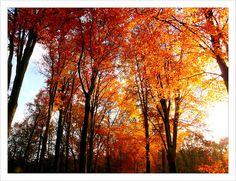autumn colors , trees in the Loofaert ,Rosmalen     Funny Pics ==> http://humorplatform.blogspot.co.at/