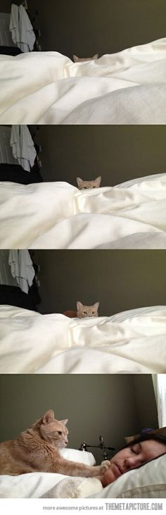 How cat people wake up\u2026