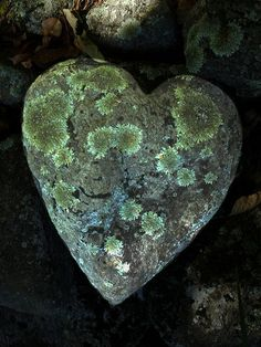 ♥ Amor y Corazones ♥ lichen stone Heart In Nature, Heart Art, I Love Heart, With All My Heart, Caillou Roche, Heart Shaped Rocks, Color Menta, Love Rocks, Arte Floral