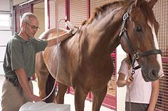 Equine Shockwave Therapy