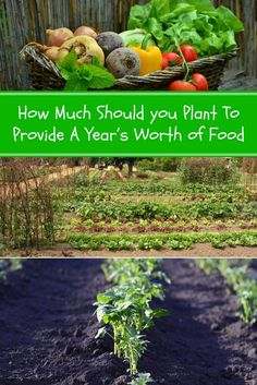 How Much to Plant in The Garden to Provide a Year's Worth of Food