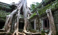 Ta Prohm temple and tree roots (Tetrameles nudiflora).  Angkor temples. Cambodia, Asia  Copyright:Mikel Bilbao © 2010