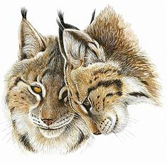 111_Lynx.jpg (366×358)