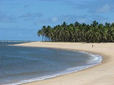 Praias Brasileiras - Maceió - imagem 03