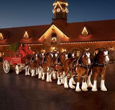 The five most memorable Budweiser Clydesdale commercials; the horses are leaving Fort Collins - Cafe Society. These are my favorite breed of large horses. Big Horses, Pretty Horses, Horse Love, Beautiful Horses, Animals Beautiful, Adorable Animals, Beautiful Creatures, Pretty Animals, Beautiful Things