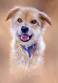 Dogs - Peter Skillen Pet Portraits