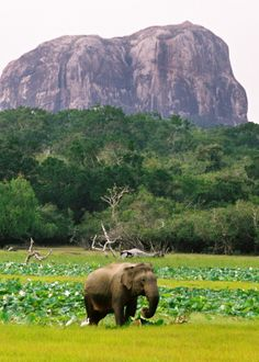 Elephant bliss - Yala Sri Lanka
