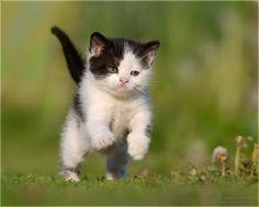 Kitten. Aweee