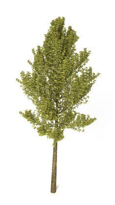 3D Model Realistic Tree | Tree 3D Models | 3DBlakeF - 3D Squirrel