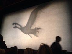 Shadow of the black swan Swan Lake, Black Swan, Birds, Dance, Dancing, Bird, The Black Swan