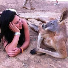 Funny pictures about Suave Kangaroo Knows How To Charm A Lady. Oh, and cool pics about Suave Kangaroo Knows How To Charm A Lady. Also, Suave Kangaroo Knows How To Charm A Lady photos. Funny Dog Photos, Funny Dog Videos, Funny Animal Pictures, Funny Images, Funny Dogs, Funny Animals, Cute Animals, Girl Pictures, Random Pictures