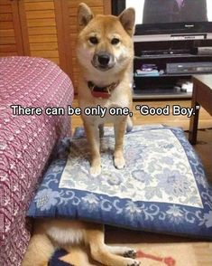 Funny Animal Pictures Of The Day 24 Pics amazing) #dogsfunnyshaming