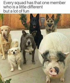 Animals are the best entertainment in the World, which make us laugh anytime, anywhere! Just look ridiculous animal picdump of the day 13 if you love funny animals. So ridiculous, funny and cute 35 funny animal pics! Funny Animal Memes, Cute Funny Animals, Funny Animal Pictures, Funny Cute, Funny Dogs, Cute Dogs, Hilarious, Animal Humor, Top Funny