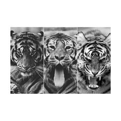 Tumblr ❤ liked on Polyvore featuring pictures, backgrounds, animals, photos, black and white and fillers
