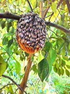 honey bee....