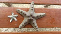 Starfish Starfish, Wildlife