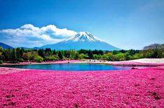 Hidden Unseen: Top18 Beautiful Flower Fields in the World