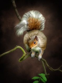 Awesome Squirrel Drawing