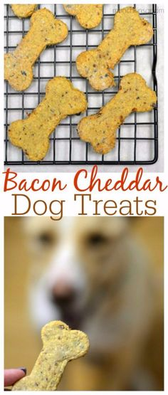35 Homemade Pet Recipes Your Dogs and Cats Will Beg For - Page 3 of 8