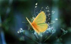 Bildergebnis für beautiful pictures