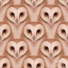 'Barn Owls' by Jesse Riggle