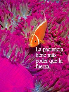 La #Paciencia tiene más #Poder que la #Fuerza. #Citas #Frases #Candidman