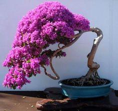 ●☺Some #bonsai inspiration for today!●●       #BonsaiInspiration