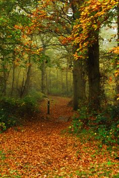 AUTUMN IN Park Wood, Appledore, Kent, England