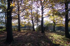 Hatfield Forest